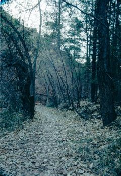 Through The Woods by MaddMedia