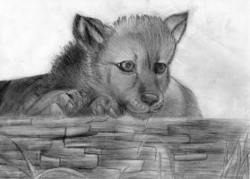 Wolf pup by Takas15