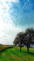 Cornfields, trees and lots of clouds by patrickjobst