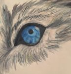 Old wolf art eye by AvaWerewolf