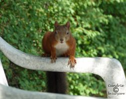 Squirrel 123 by Cundrie-la-Surziere