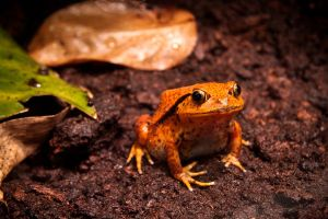 froggy frog by paoly81
