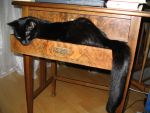 Young Ponder in the drawer by CatsWire
