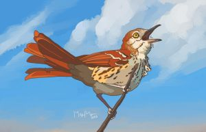 Brown Thrasher by Gingastar18