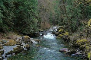 Vedder River Tributary by jonathonraist