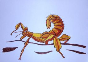 Macleays Spectre Stick Insect by AlphaPsyka