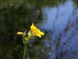 Just a Little Flower and Water by Barn0wl