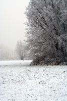 winterland 51 by priesteres-stock