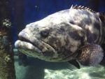 Beach Weekend XLIII by LDFranklin