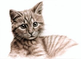 Sweet Little Kitten by ArtsandDogs