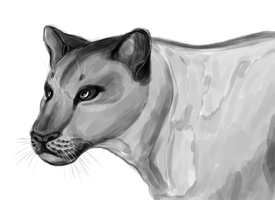 Lioness by Sontine