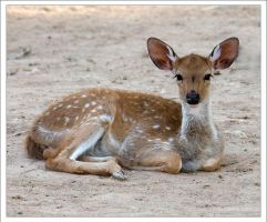 Baby Deer by Hatch1921