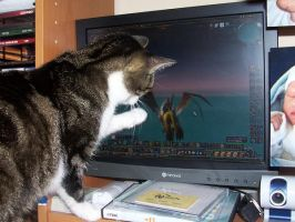 Cat loves WoW by Calime83