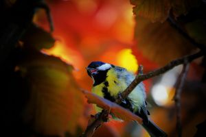 Great Tit by JoostvanD