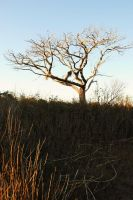 Tree of the Marsh by Bawwomick