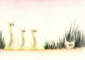 Meerkats by Morning by Scunosi