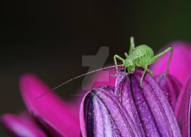 green on purple... by clochartist-photo