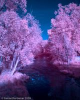 The First Infrared by Saknika
