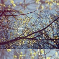 q0115 - in spring by SlevinAaron