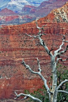 Grand Canyon 107 2015 by Moppet-Smiles