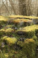Mossy log Stock 02 by Malleni-Stock