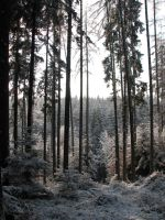 Winter Forest Background 3 by Kuoma-stock