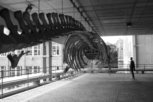 Whale Skeleton by Spoolokat