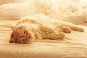 Zzzz by TammyPhotography