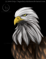 Bald Eagle by Legendary-Darkness