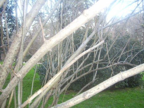 More branches. by HippyRobin
