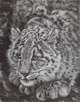 Snow Leopard by Face-Reality