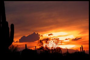 Winter Storm Sonoran Sunset by RooCat