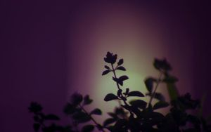 flower on balcony nightshot by tienod
