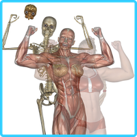 SheFreak4 Anatomy by KickAir8P