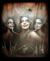 fearful of spiders by imagist