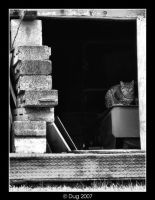 Where the Alley Cat sleeps by dugonline