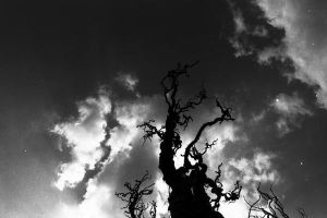 Ye old willow tree again by dowdall