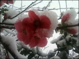 snow blossoms... by Ulqiourrafangirl