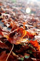 Fallen Leaves by SavanaAshleigh