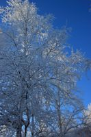 snowy tree 4 by FreedomeSoul88