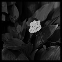 Blossom Leaves by buntscheck