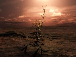 Last Plant Standing by Poet1960