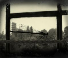 under a dragonfly wing 2 by d6rk