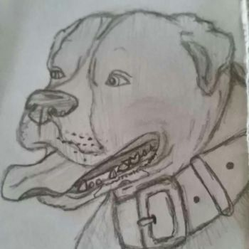 Pitbull Doodle by Delgoto