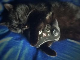 Video gaming is not only for humans by Seizure-Salads