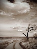 Lonely Tree by LevityGraphics
