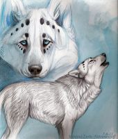 Blue and White by NatsumeWolf