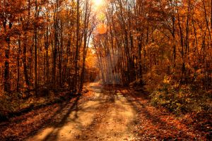 hDR Autumn Trail by Nebey