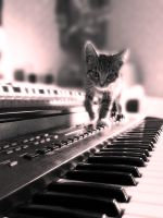 synth cat by citizenLV
