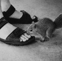This Squirrel... by JilliD